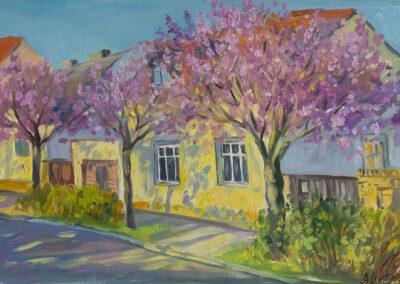 Baumblüte in Werder an der Havel